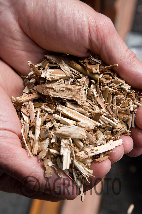 Willow Chips Used for  fuel At Cottam Power Station,.Nottinghamshire,England