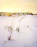 USA, Florida, beach dunes and grass at sunset, Destin