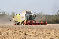 Harvesting Spring Wheat in Lincolnshire <br /> Picture Tim Scrivener 07850 303986<br /> &hellip;.covering agriculture in the UK&hellip;.