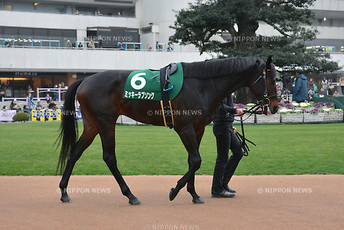 Mikki Love Song,<br /> JANUARY 5, 2016 - Horse Racing :<br /> Mikki Love Song is led through the paddock before the Sports Nippon Sho Kyoto Kimpai at Kyoto Racecourse in Kyoto, Japan. (Photo by Eiichi Yamane/AFLO)