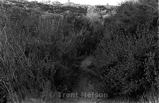 Trail in canyon where we used to hike and play.<br />
