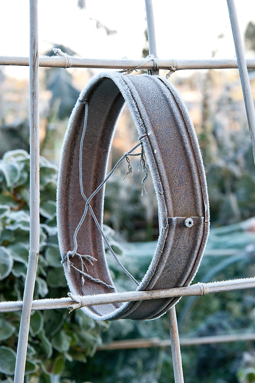 Autumn hoar frost on rusted hoop of an old garden sieve, late October.