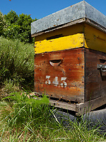 The hives are often painted by the beekeepers to help the foraging bees find their colony among the many hives that make up an apiary.<br /> Les ruches sont souvent peintes par les apiculteurs pour aider les butineuses à trouver leur colonie dans les multiples ruches que comportent un rucher.