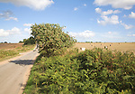 Summer landscape with country road and harvested field, Boyton, Suffolk, England