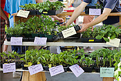 A variety of garden plants for sale from Mapel Spring Gardens at the Durham Farmer's Market. .