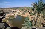 Palmeraie d'el Geitat. Mauritanie. AfriqueEl Geitat palm grove. Mauritania. Africa