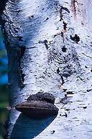 Bark Abstract, Great Island, Castine, Maine, US