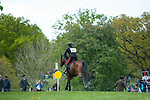 Badminton, Gloucestershire, United Kingdom, 4th May 2019, Arianna Schivo riding Quefira De L'Ormeau during the Cross Country Phase of the 2019 Mitsubishi Motors Badminton Horse Trials, Credit:Jonathan Clarke/JPC Images