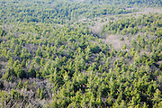 Softwood forest during the spring months from the fire tower at Pawtuckaway State Park in Nottingham, Hampshire USA.