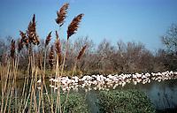 Camargue, Saint Marie de la Mer, parco ornitologico.<br /> Camargue, Saint Marie de la Mer, ornithological park