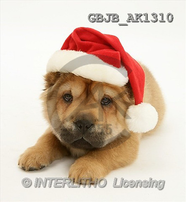 Kim, CHRISTMAS ANIMALS, photos(GBJBAK1310,#XA#) stickers