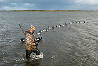 Guide with Four Flyways Outfitters Jeff Wasley placing duck decoys while hunting in Cold Bay, Alaska, Thursday, November 3, 2016. The Izembek National Wildlife Refuge lies on the northwest coastal side of central Aleutians East Borough along the Bering Sea and Cold Bay. Birds hunted include the long tailed duck, the Steller's Eider, the Harlequin, the King Eider and Brant.<br /> <br /> <br /> Photo by Matt Nager