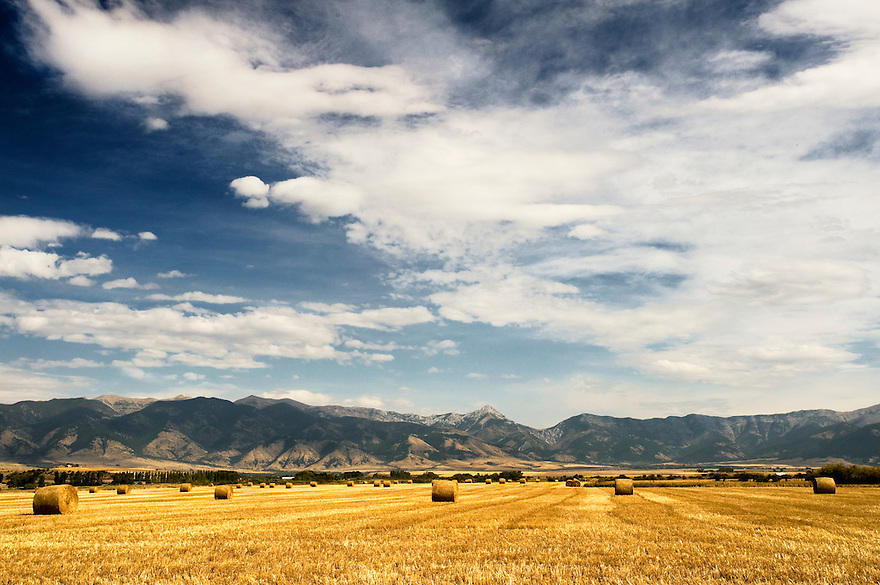 The Bridger Mountains rise above a hay field in Belgrade, Montana.