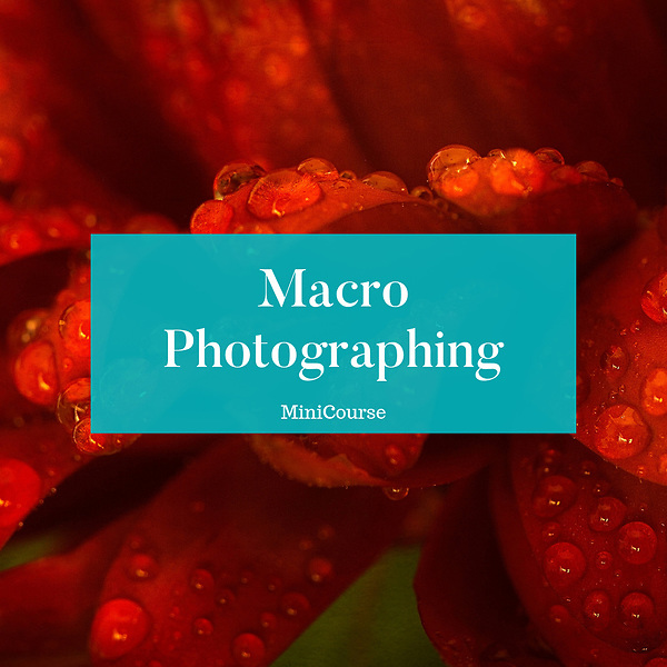 Macro Photographing Mini-Course