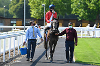 Winner of The AJN Steelstock Steel Processors British EBF Fillies' Handicap  Indie Angel ridden by Robert Havlin and trained by John Gosden  is led into the Winners enclosure during Horse Racing at Salisbury Racecourse on 9th August 2020