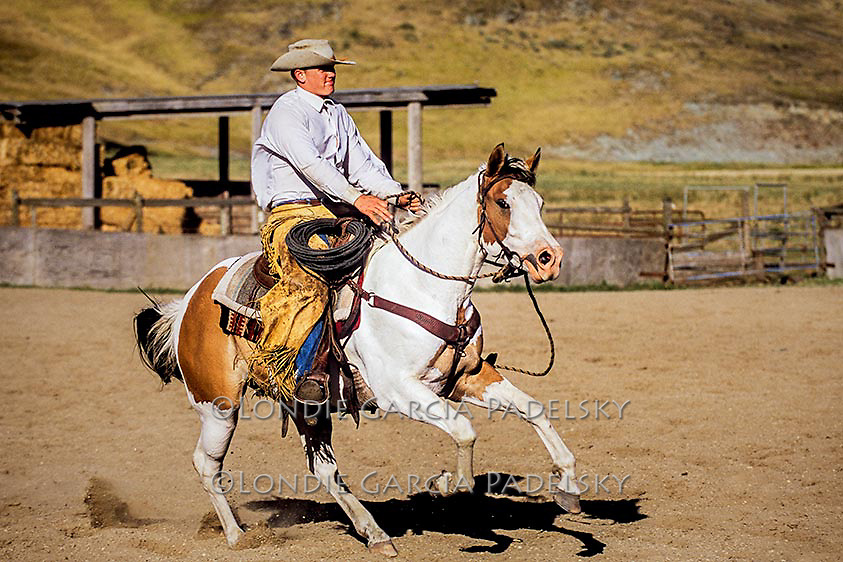 Cowboy running paint horse. San Luis Obispo, California