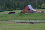 An old red barn near Newport, Washington. A pond with lilypads in the foreground. Bonner County, Idaho. USA