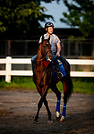 JUNE 06: Mckinzie walks back to the barn after completing preparations for The. Met Mile at Belmont Park in Elmont, New York on June 06, 2019. Evers/Eclipse Sportswire/CSM