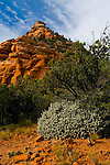 High desert shrubs and sandstone rock formation along the Kolob Terrace, Zion National Park, Utah