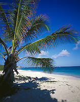 Anguilla, BWI<br /> A coconut palm tree offers shade on the white sand beach of Shoal Bay East on Anguilla's northeast coast