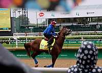 LOUISVILLE, KENTUCKY - MAY 04: Irish War Cry, owned by Isabelle de Tomaso and trained by H. Graham Motion, exercises in preparation for the Kentucky Derby at Churchill Downs on May 4, 2017 in Louisville, Kentucky. (Photo by Jon Durr/Eclipse Sportswire/Getty Images)