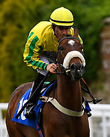 Happy Ending ridden by Kieran O'Neil goes down to the start of the M J Church British EBF Novice Stakes (Plus 10) (Div 2),  during Afternoon Racing at Salisbury Racecourse on 7th August 2017