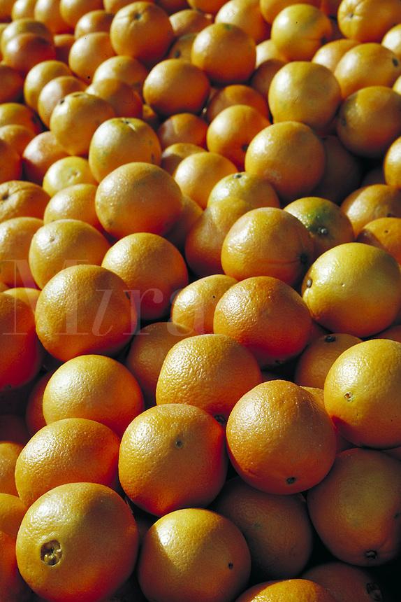 close-up of pile of oranges.  fruit, citrus, vitamin C. California.