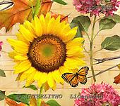 GIORDANO, STILL LIFE STILLLEBEN, NATURALEZA MORTA, paintings+++++,USGI2832,#I# sunflower