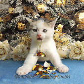 CHIARA,CHRISTMAS ANIMALS, WEIHNACHTEN TIERE, NAVIDAD ANIMALES, paintings+++++,USLGCHI560,#XA# ,funny ,funny