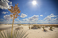 High Noon on the Dunes - New Mexico<br /> White Sands National Monument