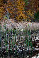 Fall reflections on a small pond in the Ozark National Forrest in Arkansas.