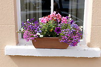 Window box, cottage, Strangford, Co Down, 4th August 2018, 201808044493<br />