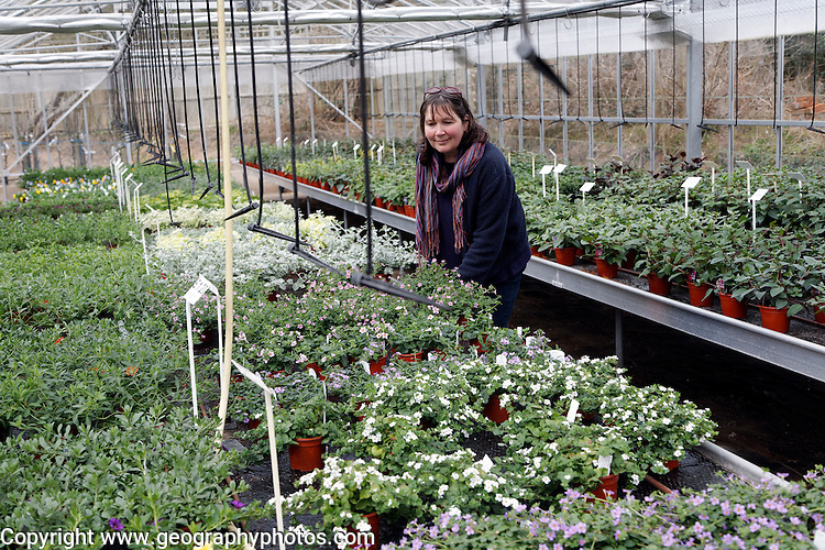 Garden Centre plant nursery, Ladybird Nursery, Gromford, Suffolk, England Model Released. Woman in Garden Centre plant nursery, Ladybird Nursery, Gromford, Suffolk, England
