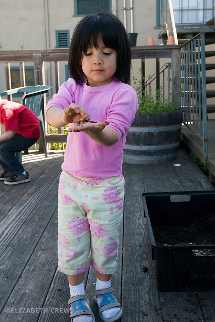 Berkeley CA Girl, Guatelalan, four-years-old excited with worm she's discovered in worm compost bin  MR
