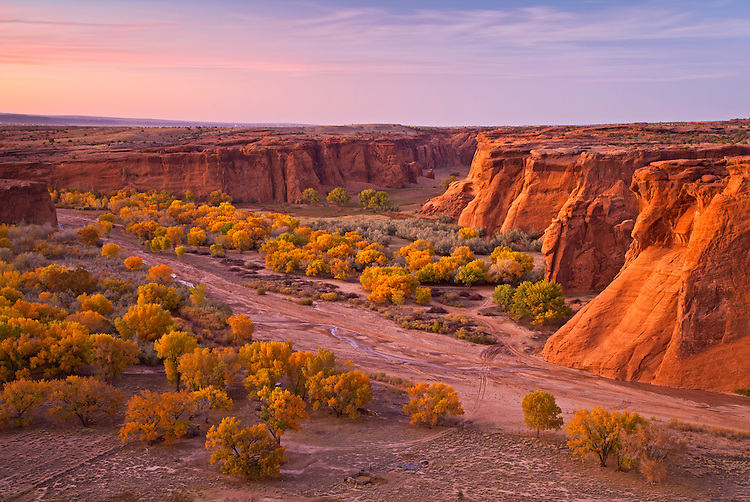 Cottonwood trees in autumn in Canyon de Chelly National Park, Arizona, United States of America