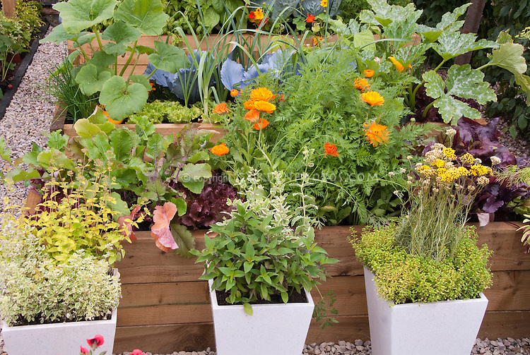 Herbs In Containers Vegetable Garden Plant Flower Stock Photography