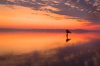 Sunrise at Reel Foot Lake.