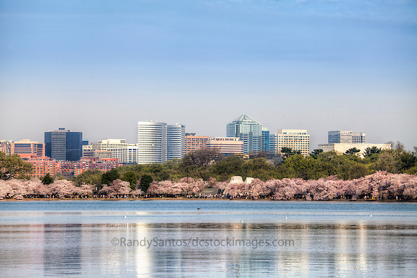 Cherry Blossoms Rosslyn Tidal Basin Washington DC Cherry Blossoms Jefferson Memorial Tidal Basin Washington DC Cherry Blossoms blooming around the Tidal Basin in Washington, DC symbolize the natural beauty of our nation's capital city and has become part of Washington, D.C.'s rite of spring. Landmarks include the Jefferson Memorial, Washington Monument, and US Capitol. A popular tourist attraction and travel destination for many visiting Washington, D.C.
