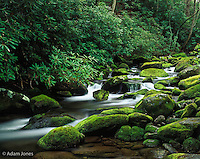 Roaring fork cascading through moss covered boulders, Roaring Fork Motor Nature Trail,Great Smoky Mountains National Park, Tennessee