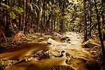 Joalah National Park, Mount Tamborine, Queesnland, Australia.  The tranquil Cedar Creek just below Curtis falls looking downstream.