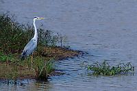 Pond Heron, Yala National Park, Sri Lanka
