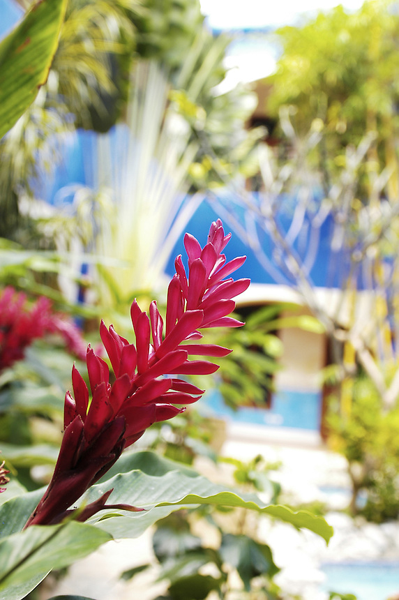 A tropicla flower in the courtyard of Hotel Mediomundo in Merida's city center.