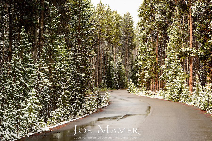 Wet road through snow covered forest in Yellowstone National Park after June snowfall.