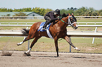 Fasig-Tipton Florida Sale,Under Tack Show. Palm Meadows Florida 03-23-2012 Arron Haggart/Eclipse Sportswire.