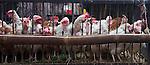 Chickens for sale at market, Yuanyang, China