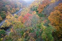 Deciduous woods autumn; Wissahickon Creek; from Wissahickon Memorial Brige, Henry Avenue; PA, Fairmount Park