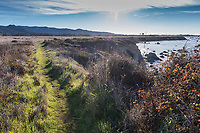 The Atkinson Bluff Trail covered in green with the Pacific to the right at the Año Nuevo State Park on California's coast.