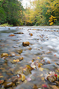 Autumn foliage along the Gale River in Franconia, New Hampshire USA during the autumn months.