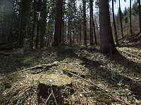 FOREST_LOCATION_90205