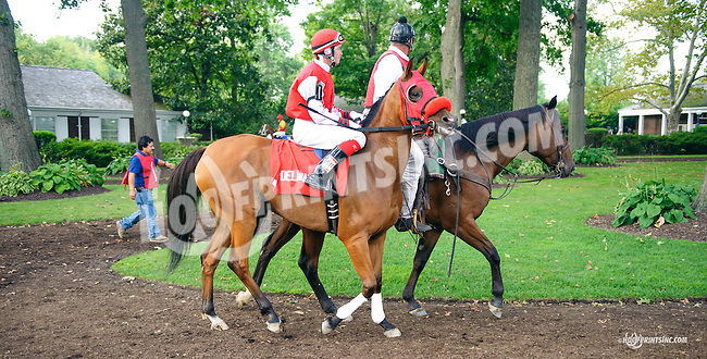 Royal Richess before The Buzz Brauninger Arabian Distaff Handicap (grade 1) at Delaware Park on 9/5/15